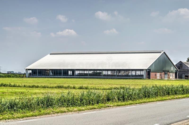 Exploração agrícola de leiteria moderna fotografia de stock royalty free