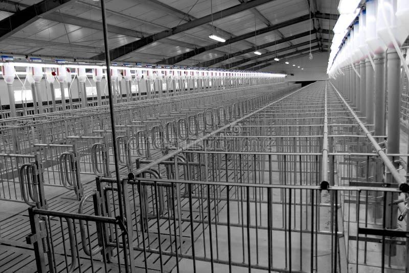 Exploração agrícola de porco moderna da criação de animais imagem de stock