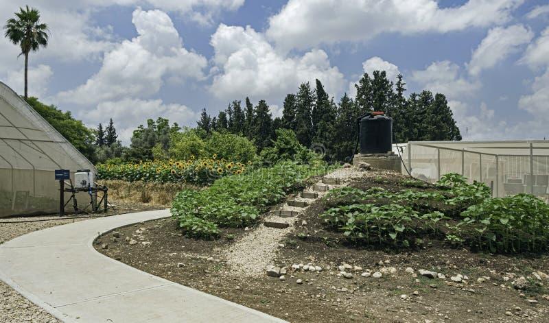 Exploração agrícola de teste da irrigação de gotejamento em um kibutz em Israel fotografia de stock