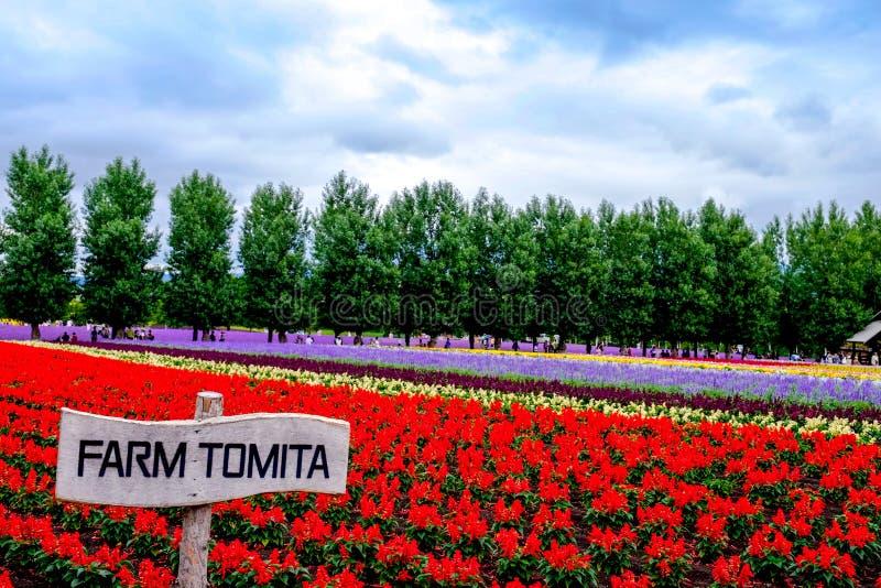 Exploração agrícola de Tomita, jardim Japão foto de stock royalty free