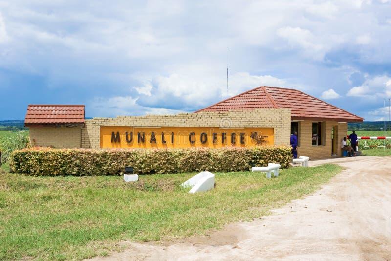 Exploração agrícola do café de Munali foto de stock royalty free