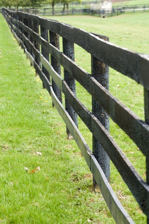 Exploração agrícola do cavalo de Kentucky foto de stock royalty free