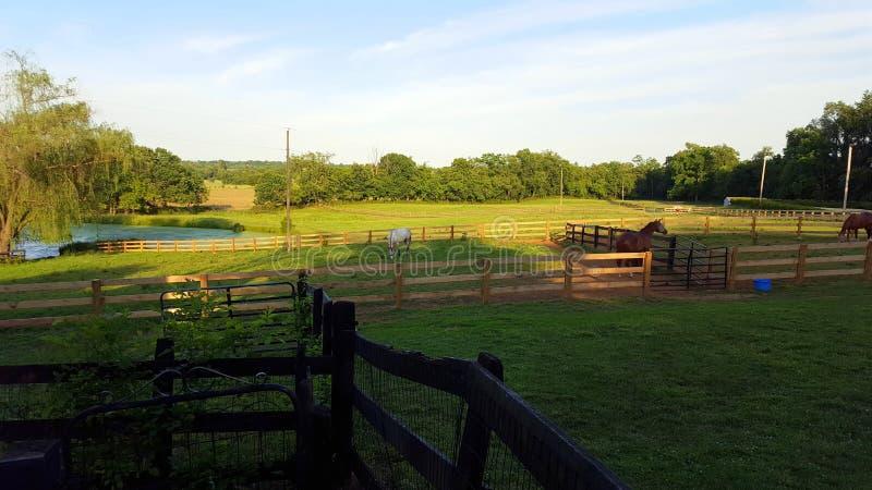Exploração agrícola do cavalo de Kentucky fotos de stock