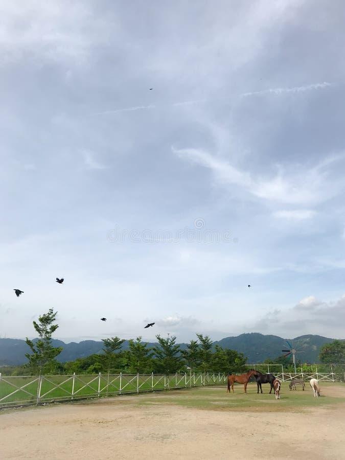 Exploração agrícola do cavalo de Penang fotos de stock royalty free