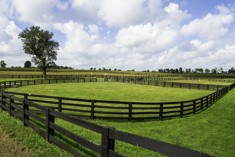 Exploração agrícola do cavalo em Lexington, Kentucky foto de stock