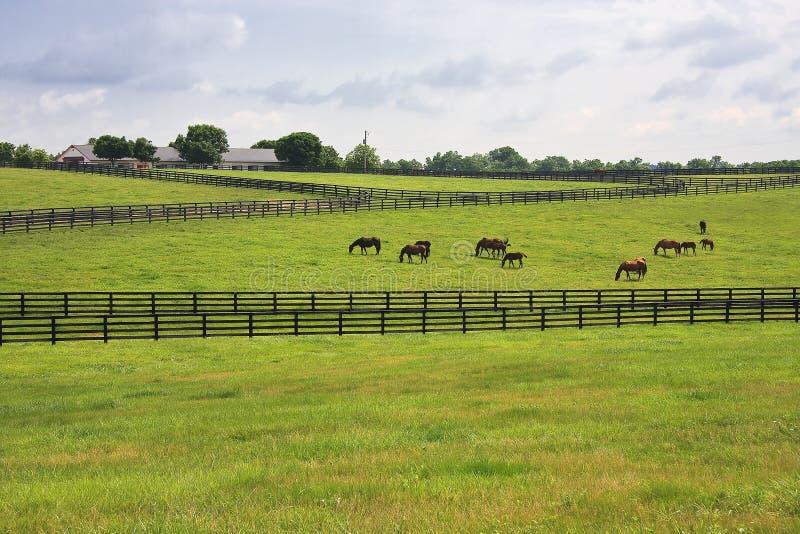 Exploração agrícola do cavalo no campo de Kentucky fotos de stock royalty free