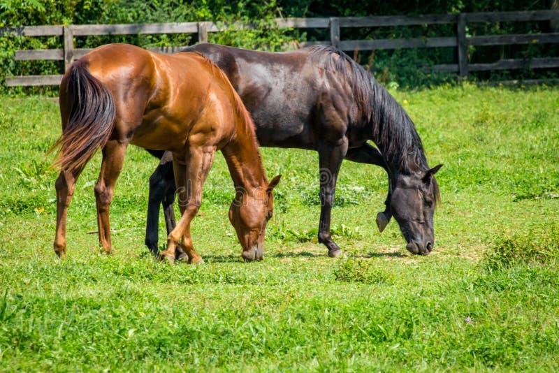 Exploração agrícola do cavalo do rancho fotos de stock