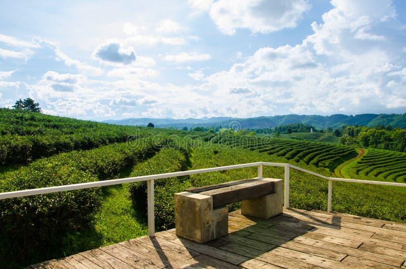Exploração agrícola do chá com céu azul foto de stock royalty free