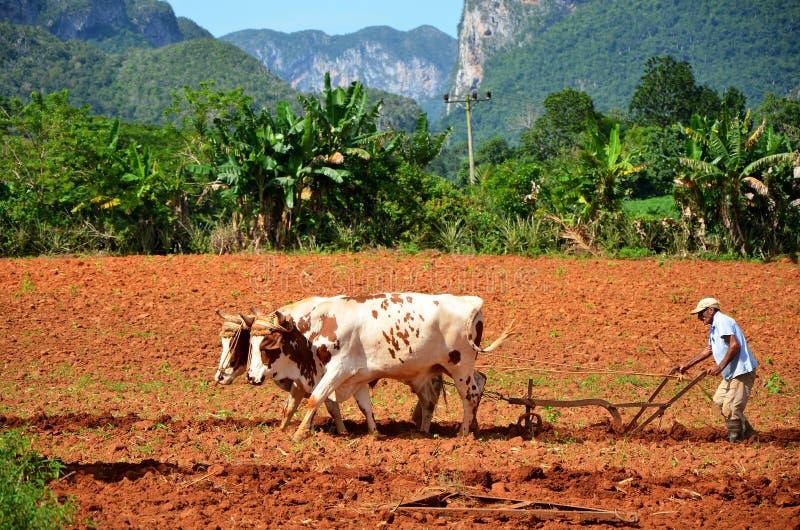 Exploração agrícola do cigarro em Vinales, Cuba fotos de stock royalty free