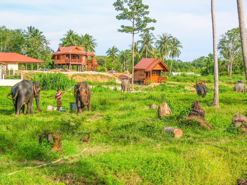 Exploração agrícola do elefante em Phuket, Tailândia fotos de stock royalty free
