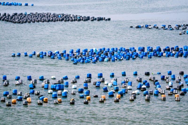 A exploração agrícola do marisco é feita do tanque plástico residual com un da corda fotos de stock