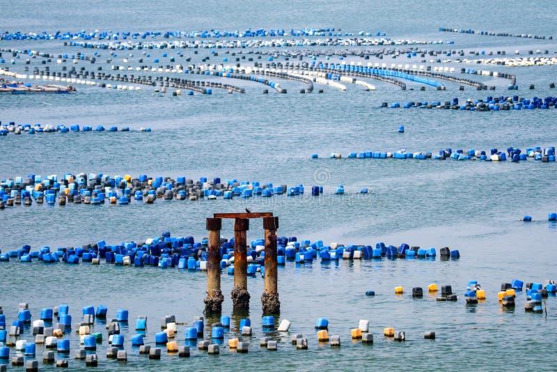 A exploração agrícola do marisco é feita do tanque plástico residual com un da corda imagens de stock royalty free