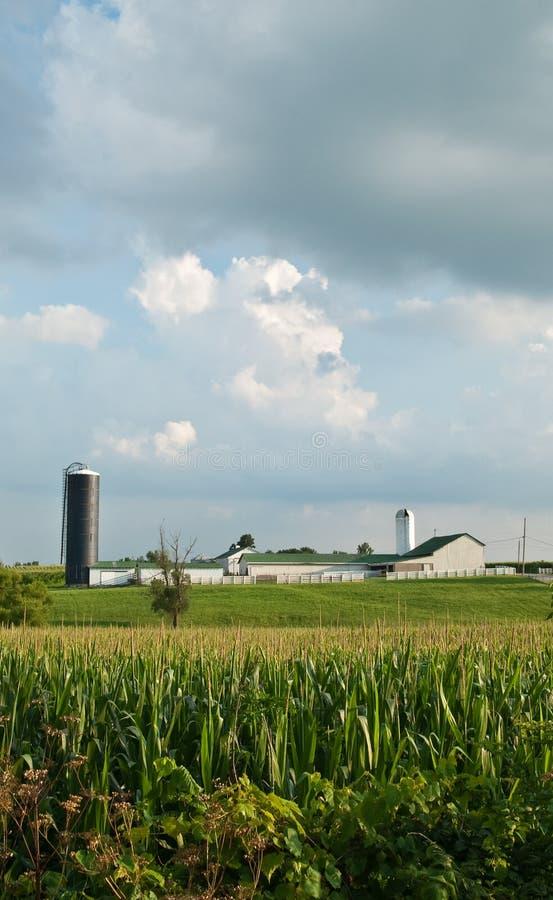Exploração agrícola do milho fotografia de stock