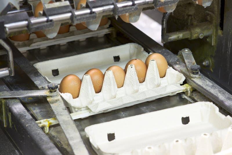 Exploração agrícola do ovo fotos de stock