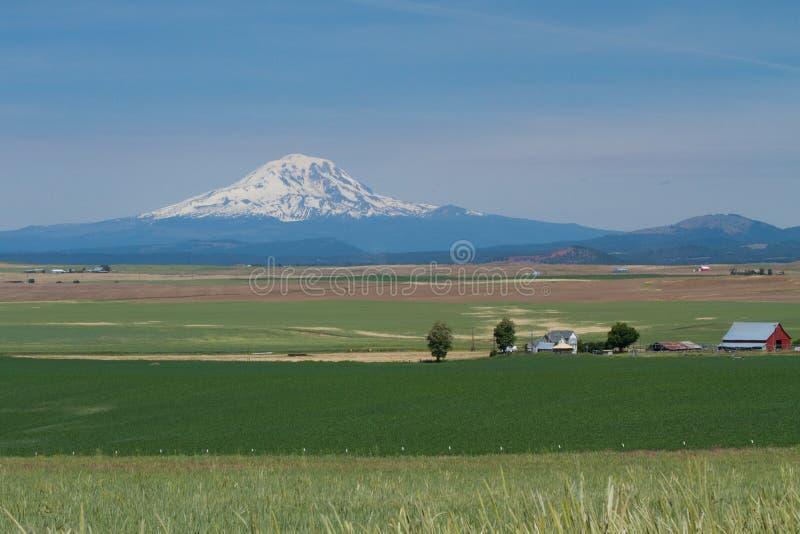 Exploração agrícola do trigo em Washington Valley Agriculture oriental com o Monte Rainier fotografia de stock royalty free