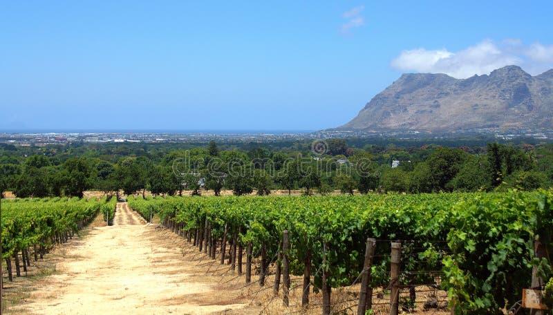 Exploração agrícola do vinho imagem de stock