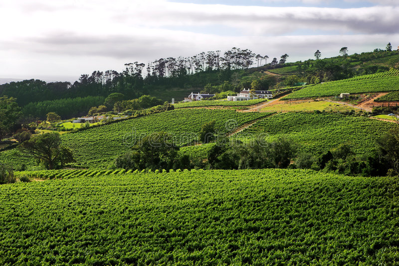 Exploração agrícola do vinho na rota ocidental do vinho do cabo imagens de stock