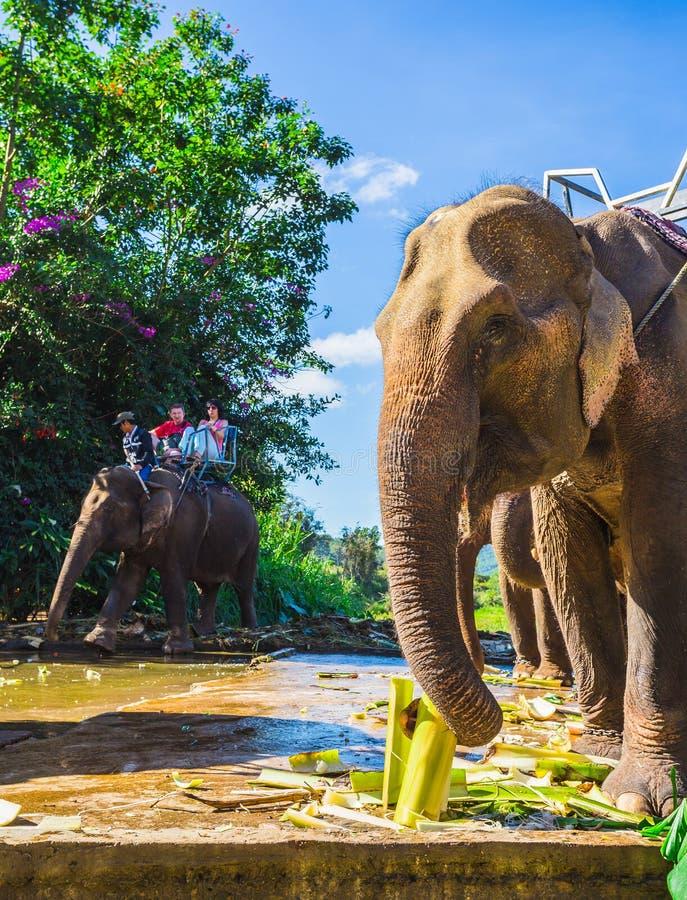 A exploração agrícola dos elefantes não longe de Dalat vietnam fotografia de stock royalty free