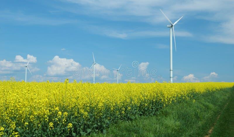 Exploração agrícola dos windturbines perto do campo da violação fotos de stock royalty free