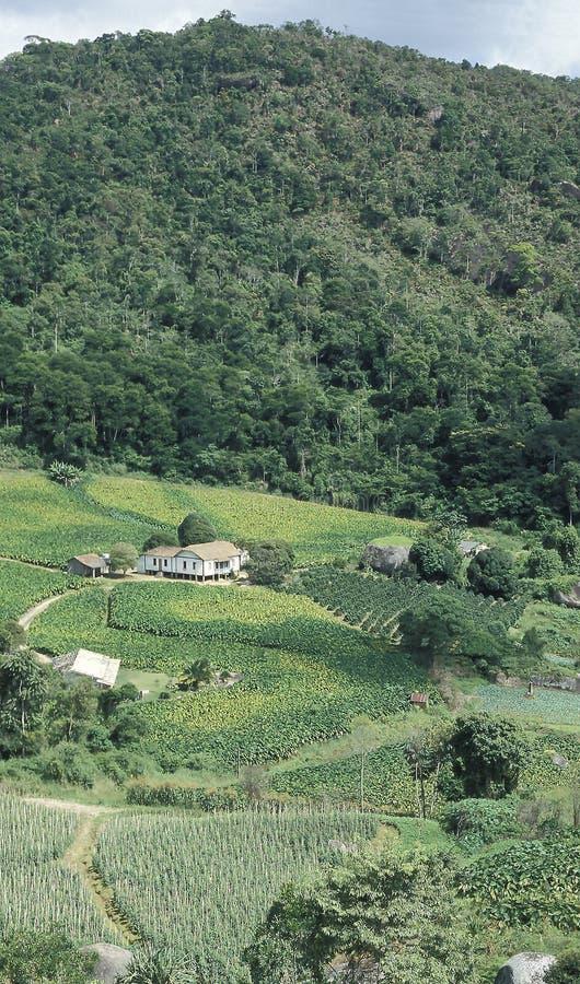 Exploração agrícola e desflorestamento em Brasil do sul foto de stock royalty free