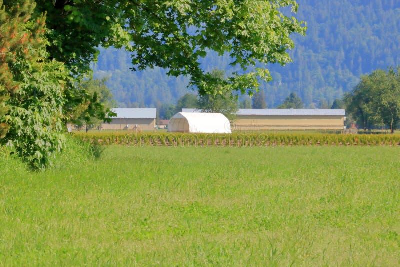 Exploração agrícola e floresta do vale foto de stock