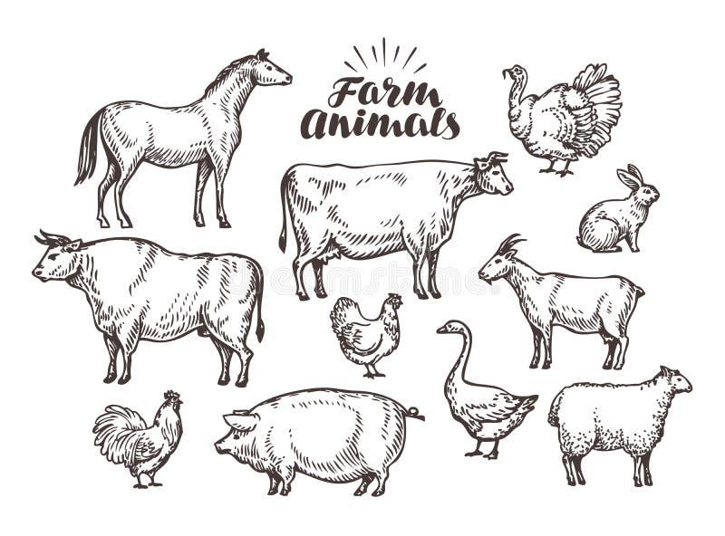 Exploração agrícola, esboço do vetor Animais da coleção tais como o cavalo, vaca, touro, carneiro, porco, galo, galinha, galinha, ilustração royalty free