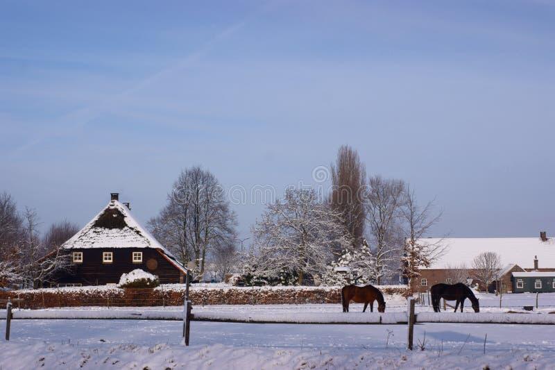 Download Exploração Agrícola Holandesa Foto de Stock - Imagem de cavalo, dezembro: 12809036