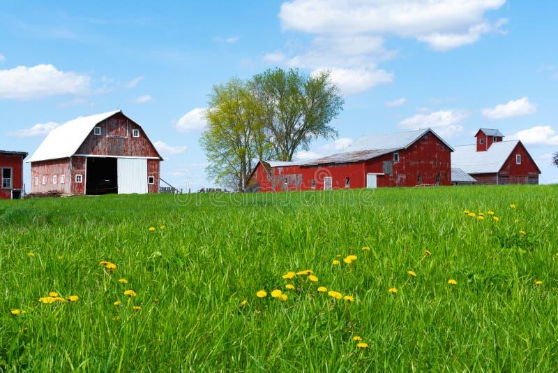 Explora??o agr?cola no campo de grama aberto imagem de stock royalty free