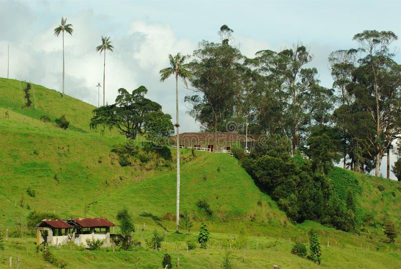 Exploração agrícola no vale de Cocora (Colômbia) fotografia de stock