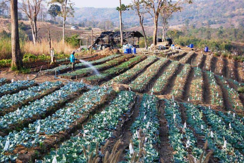 exploração agrícola orgânica foto de stock