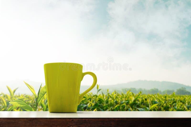 Exploração agrícola orgânica da plantação excedente atual do copo de chá verde de Matcha, Morni foto de stock royalty free