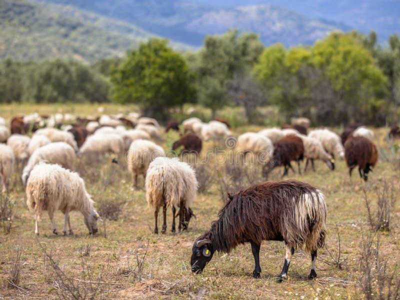 Exploração agrícola orgânica em Grécia imagem de stock royalty free
