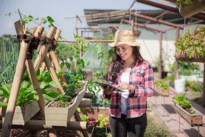 Exploração agrícola ou jardim do telhado foto de stock