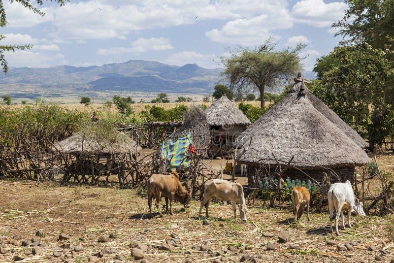 Exploração agrícola pequena Vale de Omo perto de Konso etiópia foto de stock royalty free