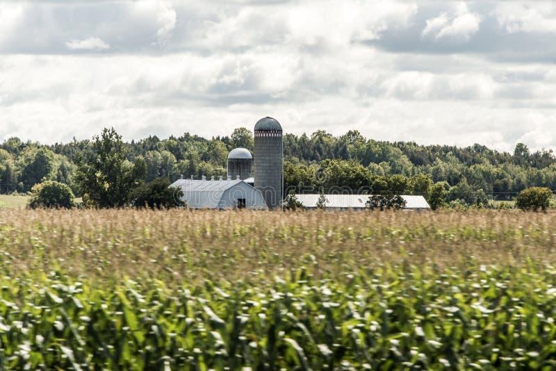 Exploração agrícola rural de Ontário com cultivo de Canadá dos animais da agricultura do armazenamento do silo do celeiro imagens de stock royalty free