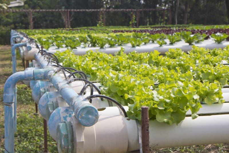 Exploração agrícola vegetal hidropônica orgânica imagem de stock