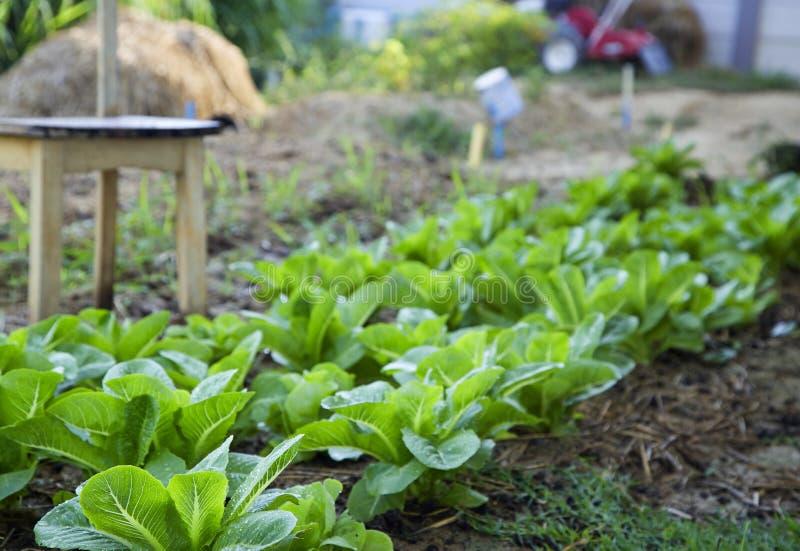 Exploração agrícola vegetal orgânica em Tailândia imagens de stock royalty free