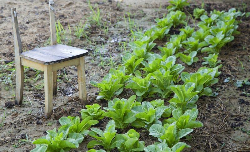 Exploração agrícola vegetal orgânica em Tailândia foto de stock royalty free