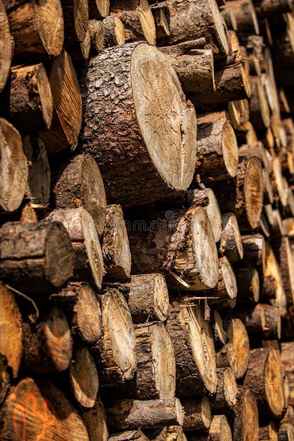 Exploração de silvicultura do pinheiro Cotoes e logs O Overexploitation conduz ao desflorestamento que põe em perigo o ambiente foto de stock