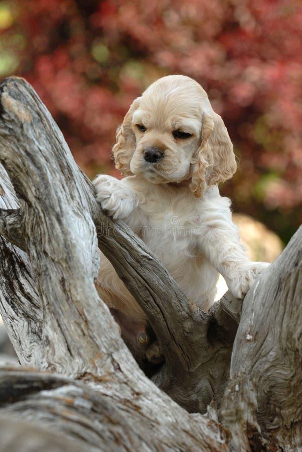 Exploração do filhote de cachorro fotografia de stock royalty free