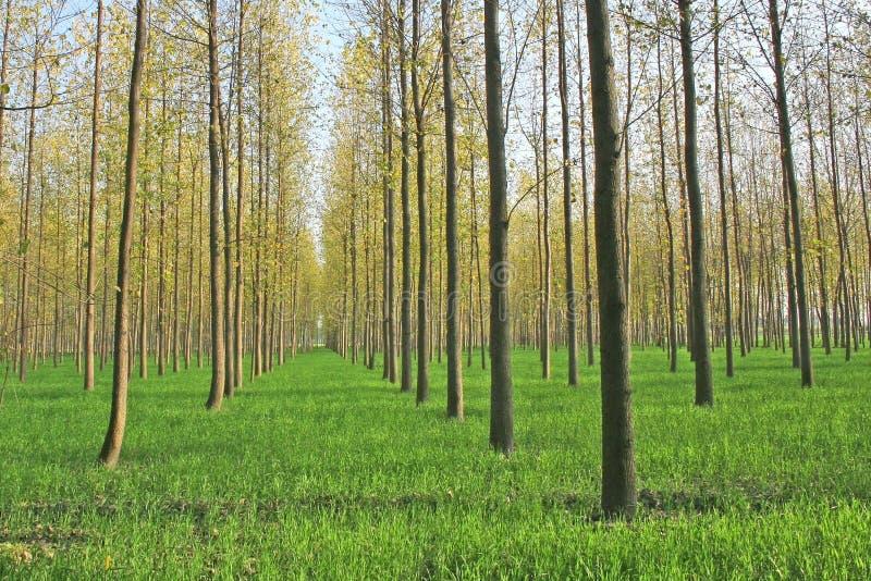 Explorações agrícolas cénicos da plantação da árvore em india norte