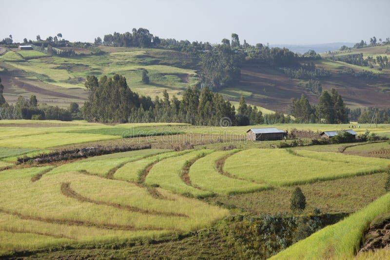Explorações agrícolas em montanhas etíopes imagem de stock