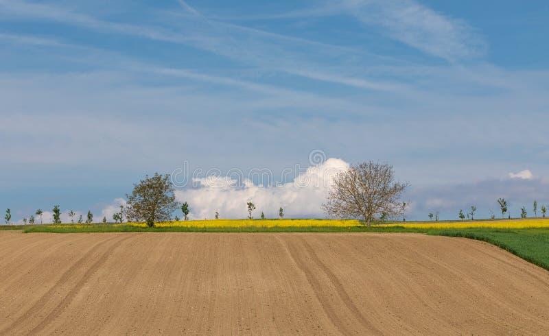Explora??o agr?cola arable rural Campo azul c?u foto de stock