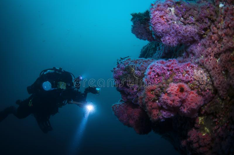 Explorador submarino que fotografa a vida marinha imagem de stock