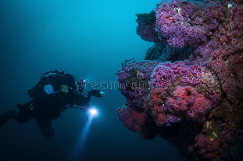Explorateur sous-marin photographiant l'espèce marine image stock