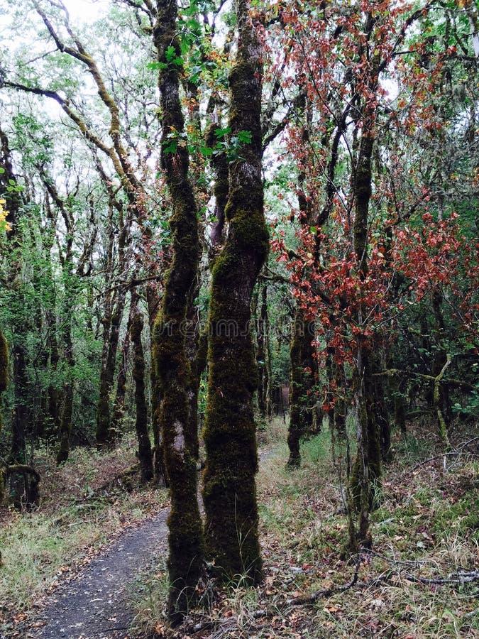 Explorer les forêts de l'Orégon images libres de droits