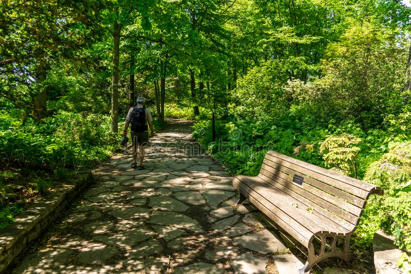 Explorez le jardin d'ombre au jardin botanique de Montréal photos libres de droits