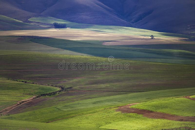 Rolling green agricultural fields with mountains in the background - Caledon, Western Cape - South Africa. stock photos