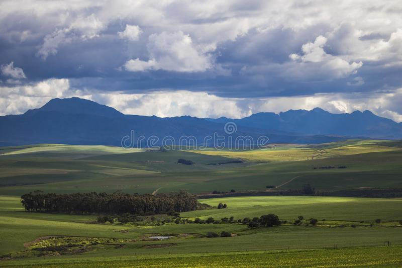 Rolling green agricultural fields with mountains in the background - Caledon, Western Cape - South Africa. royalty free stock photo