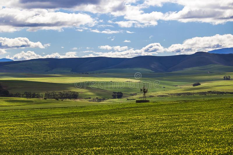 Rolling green agricultural fields with windmill and mountains in the background - Caledon, Western Cape - South Africa. royalty free stock photography